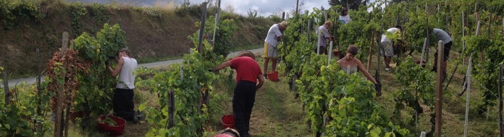 Contatta Azienda Vinicola Bragagnolo Vini Passiti in Valle Bagnario